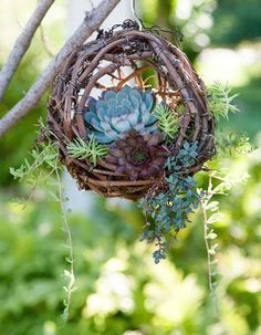 50 Unique & Modern DIY Outdoor Hanging Planter Ideas For Your Garden - Planters - Ideas of Planters - Hanging Grapevine Birds Nest Succulent. 50 Unique & Modern DIY Outdoor Hanging Planter Ideas For Your Garden - Planters . Diy Planters Outdoor, Succulent Planter Diy, Hanging Succulents, Succulents In Containers, Cacti And Succulents, Hanging Planters, Garden Planters, Outdoor Gardens, Planter Ideas