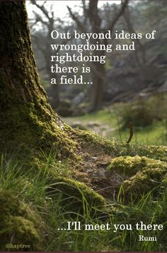Out beyond ideas of wrongdoing and rightdoing there is a field, I'll meet you there - Rumi