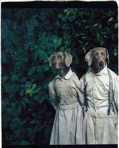 William Wegman - Anthropomorphic dogs art