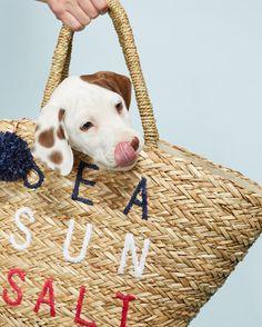 Beach bag essentials: shades, sunblock, puppy 🐶 #memorialday (link in profile to shop the Sea Sun Salt Tote)