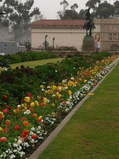 Balboa Park ~ San Diego #flowers