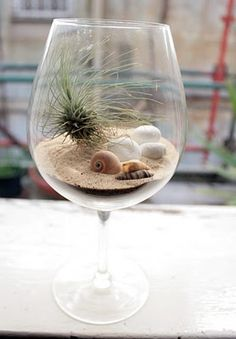Beachy wine glass terrarium. Amazing!