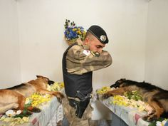 A sad but beautiful picture of a mourner at the funeral for two police dogs who died in service.    The two police dogs who died in service were cremated with military honors of state, in the crematorium for animals Pet Memorial Pampulha, Pampulha in the region of Belo Horizonte, Minas Gerais.
