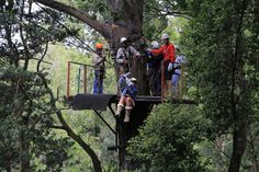 saath+Africa+gardens | Tsitsikamma Canopy Tour, Garden Route – South African Tourism