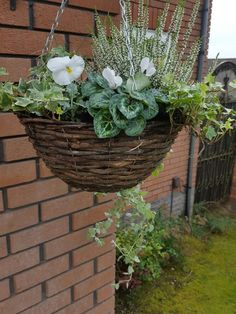 My new winter hanging basket ivy carex white pansies cineraria cyclamen white heather Winter Hanging Baskets, Plants For Hanging Baskets, Autumn Garden Pots, Winter Garden, Patio Plants, Garden Planters, Indoor Plants, House Plants, Winter Plants