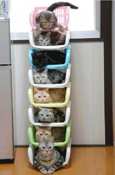 kitty cats cat city b**ch cat cat city b**ch - I Love Cats, Cute Cats, Funny Cats, Funny Humor, Cats Humor, Funny Drunk, Adorable Kittens, It's Funny, Funny Tweets