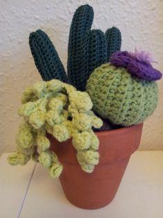 cactus et succulentes au crochet