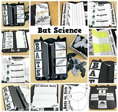Teaching in October, october themes, pumpkin science, spider science, bat science, october writing, october math, october literacy