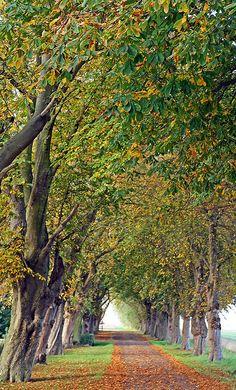 Driveway by meg_williams, via Flickr - Peterborough, UK.
