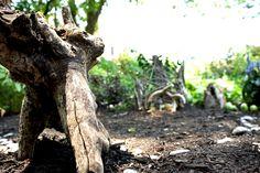 Environmental Art / Fairy House