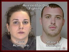 """Petition to sign and share. 12 22 2012. To: Chester County District Attorney Tom Hogan    We the undersigned demand that you prosecute - Shane Santiago and Laura Acampora - for running a DOG FIGHTING RING from their home in which they shared with their 5 young children.   The house has been dubbed a """"House of Horrors"""" after what was found at the scene."""