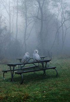 Owls in mist. via: crescentmoon06 - Imgend