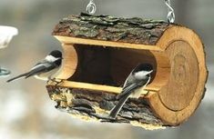 Black capped Chickadees on cool bird feeder