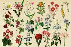 Antique Botanical Floral Graphics 2 by Eclectic Anthology on @creativemarket