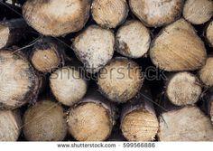 Log Timber Cross Section Pattern Grains (editar agora): foto stock 599566886 Cross Section, Logs, Photo Editing, Grains, Royalty Free Stock Photos, Pattern, Pictures, Image, Photos