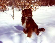 Scoobie in the snow