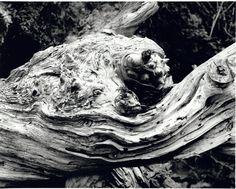 "Edmund Harry Smith, ""Moclips # 12"", 2006. Black & White Fiber Print"