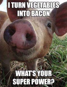 Pig Meme #Bacon, #Super