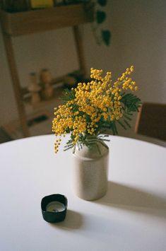 Flower Aesthetic, Mellow Yellow, Ikebana, Home Deco, Indoor Plants, Decoration, Planting Flowers, Floral Arrangements, Greenery