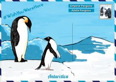 Ahead of World Penguin Day, The Latin America Travel Company have created a guide on where to see penguins in their natural habitats. Galapagos Penguin, Penguin Day, Penguin Species, Emperor Penguin, Sustainable Tourism, Galapagos Islands, Travel Companies, Antarctica, Continents