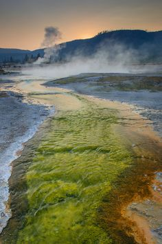 Thermophilic algae and bacteria color a runoff stream of Sapphire Pool in Biscuit Basin, Yellowstone National Park by Alan Majchrowicz