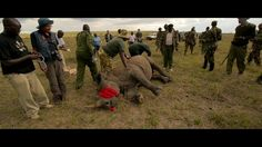 WWF working with KWS to protect Kenya's rhinos Earth Hour, Mosaic Pictures, Rhinos, Animal Rights, Natural World, Ecology, Kenya, Conservation, Wildlife