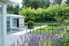 Grote exclusieve moderne tuin