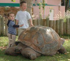 Methuselah, a 130-year-old 500-pound tortoise.  Died July 10, 2011.