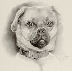 "this little mini is one of my palm-sized drawings for $250, on a 7""x7"" piece of Fabriano paper. Puppy Pose, Dog Portraits, French Bulldog, Palm, Wildlife, This Or That Questions, Drawings, Dogs, Artist"
