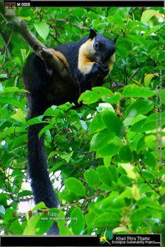 Khao Phra Thaew Ecological Sustainability Project - Rainforest in Phuket