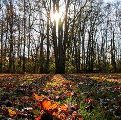 Wishing it were Fall all year long.  #fall #autumn #sun #cozy #leaf #leaves #sweaterweather #tree #sun #shadows #light #photo #photograph
