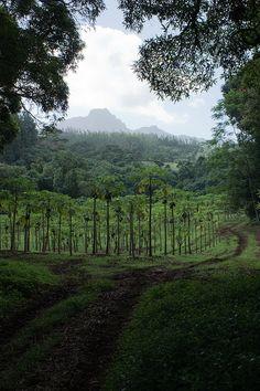 Moorea | French Polynesia Bora Bora, French Polynesia Honeymoon, Places To Travel, Places To See, Moorea Tahiti, Polynesian Islands, Exotic Places, Paradise Island, South Pacific