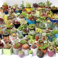 Plant Care Tips: Succulents in Winter Succulent Soil, Succulent Arrangements, Planting Succulents, Indoor Succulents, Outdoor Gardens, Indoor Outdoor, Succulents In Containers, Plastic Containers, Little Plants
