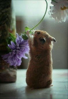 * * ANI-NEWS: Hamster opened his own flower shop, but was cited for taking flowers from human habitats. Two dozen rare African orchids to the mayor turned it around to hamster promising not to ' help himself ' to others' flowers. Cute Creatures, Beautiful Creatures, Animals Beautiful, Beautiful Images, Cute Baby Animals, Animals And Pets, Funny Animals, Farm Animals, Animal Pictures