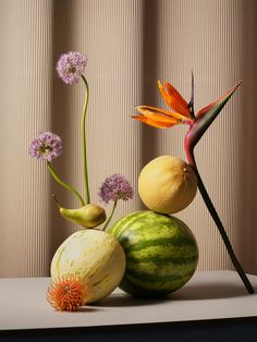Maciek Miloch Floral 'Feast' Compositions – Trendland Online Magazine Curating the Web since 2006 Object Photography, Still Life Photography, Product Photography, Abstract Photography, Photography Tips, Street Photography, Landscape Photography, Portrait Photography, Still Life Photos