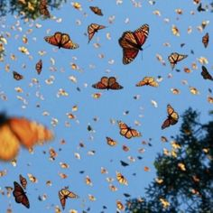 Indie Aesthetic - Wall Collage | Butterfly Wallpaper, Monarch Butterfly  B3B