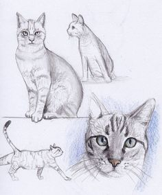Spectacular Make a Realistic Skin Blending Technique Ideas : Realistic Drawing Cat Drawing, and like OMG! Unbelievable Make a Realistic Skin Blending Technique Ideas. Spectacular Make a Realistic Skin Blending Technique Ideas. Simple Cat Drawing, Line Drawing, Drawing Sketches, Animal Sketches, Animal Drawings, Art Drawings, Draw Tips, Illustration Tutorial, Cat Sketch