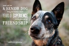 Senior Dog Quote #Friendship