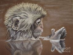 Bathing Monkey Painting by Kim Shayler - Bathing Monkey Fine Art Prints and Posters for Sale