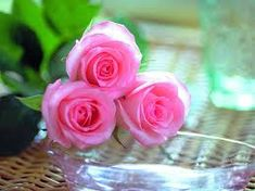 Risultati immagini per most beautiful pink roses in the world Flowers Roses Bouquet, Rare Flowers, Flowers Nature, Red Roses, Beautiful Pink Roses, Amazing Flowers, Beautiful Flowers, Tree Wallpaper Green, Rose Wallpaper