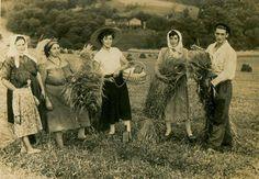 A sega de Vilarim. Riotorto, circa 1950.