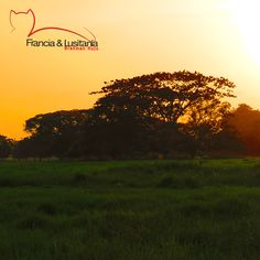 Les compartimos este atardecer como de película.#BrahmanRojo#Montería#Ganadería#AmorporelBrahman#Colombia#Pasion@asocebu @fedegan#HaciendasFranciaYLusitania