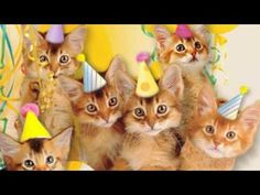 "Listen as these adorable cats meow the ""happy birthday"" song in an ecard from…"
