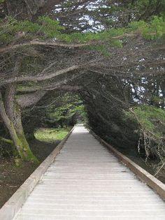 MacKerricher State Park Boardwalk to cliffs/ tidepools