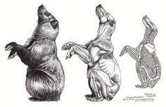 5f7d2939492dcd0c6c8d85ab14c0e33f bear anatomy google search bear art
