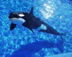 Blog de angelfive - Page 21 - Pour l'amour des orques - Skyrock.com
