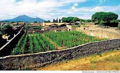 Campania's world-class white wines