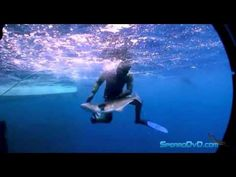 Onefish Spearfishing - Cameron Kirkconnell .....lucky guy.  Lol