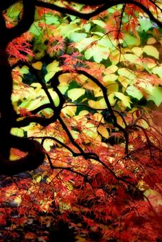 Glowing #Fall #photography #red #autumn