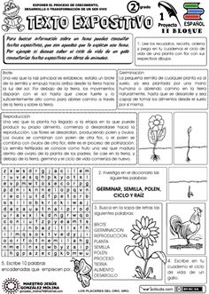 Texto expositivo                                                                                                                                                     Más Spanish Basics, Ap Spanish, Spanish Lesson Plans, Spanish Lessons, Spanish Classroom, Teaching Spanish, Reading Anchor Charts, Teachers Corner, Spanish Language